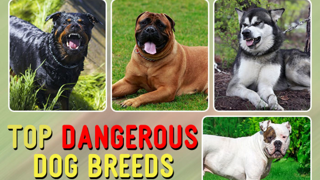 Top 25 Most Dangerous Dog Breeds In The
