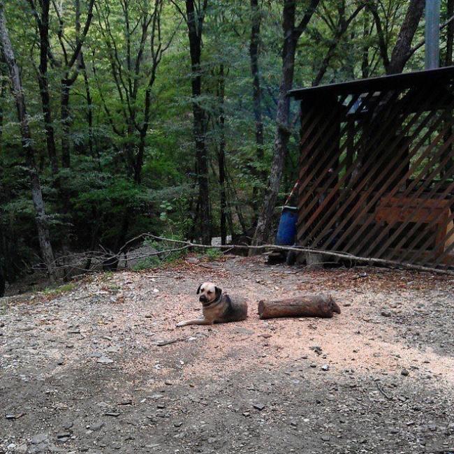 The Half Dog And Half Wood